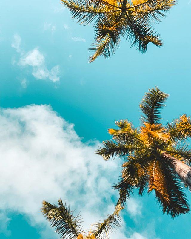 aloha vibes. 🤙