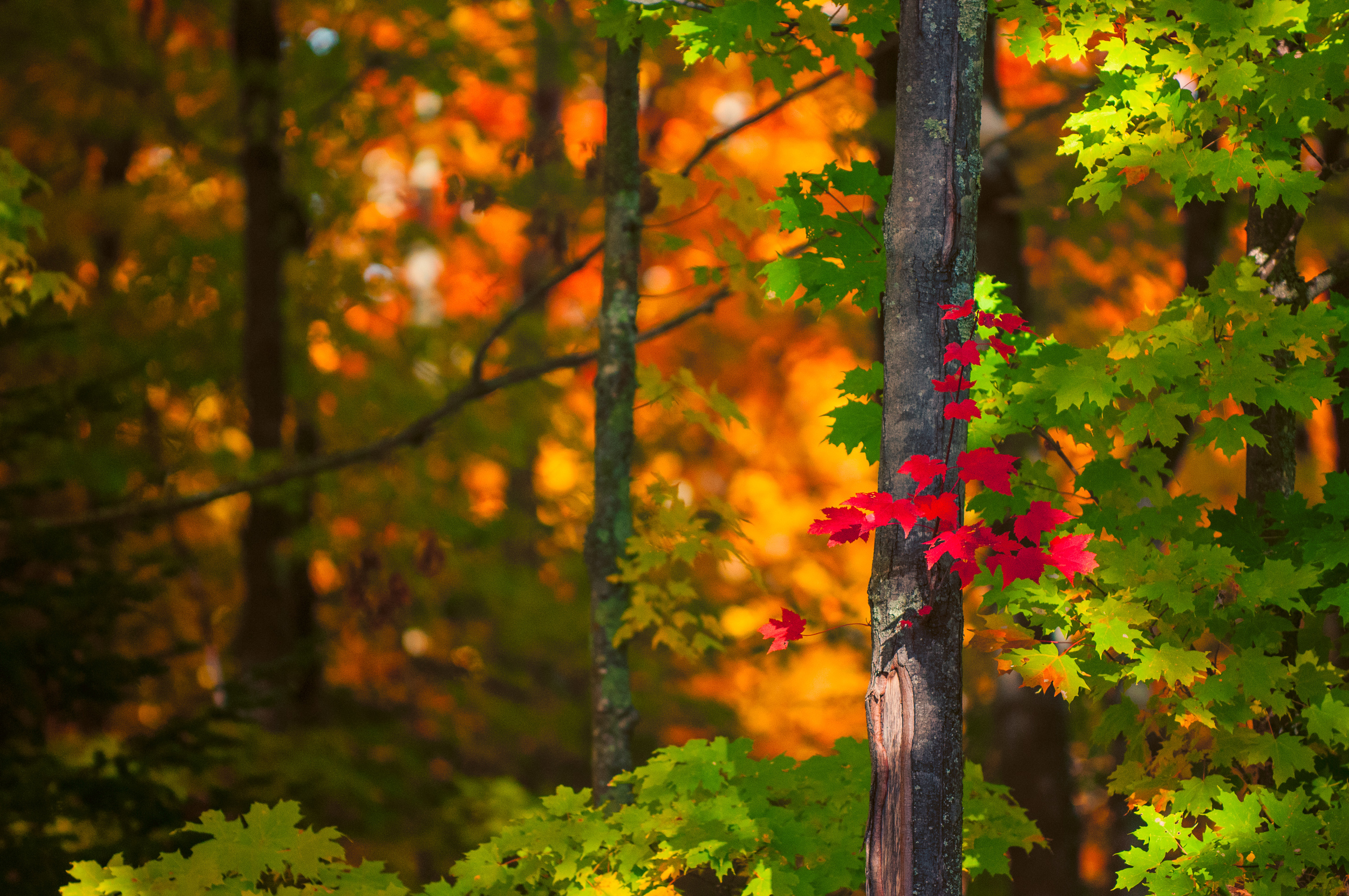 Fall Colors (84 of 190)-Edit-11.jpg