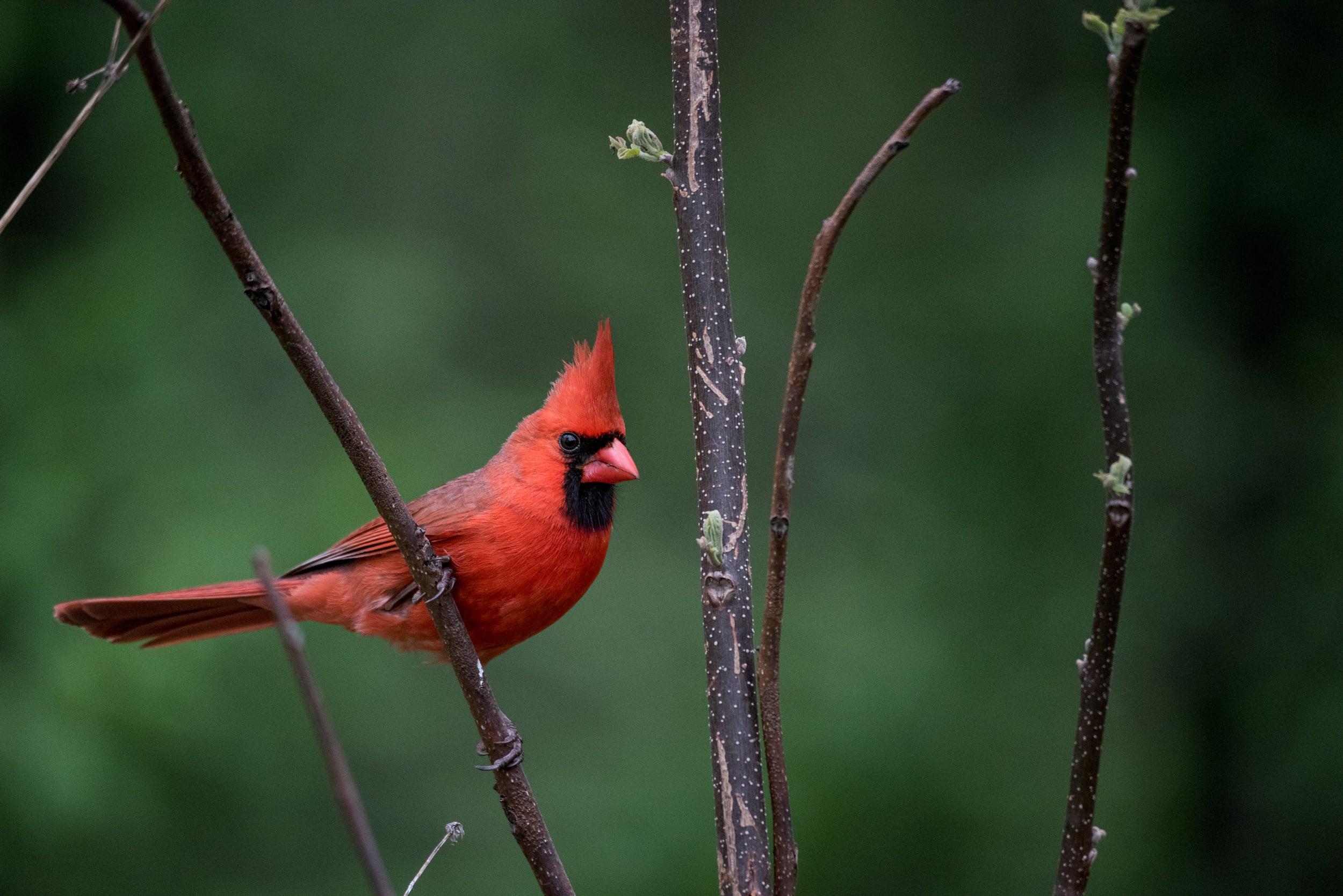 Birds (16 of 18).jpg