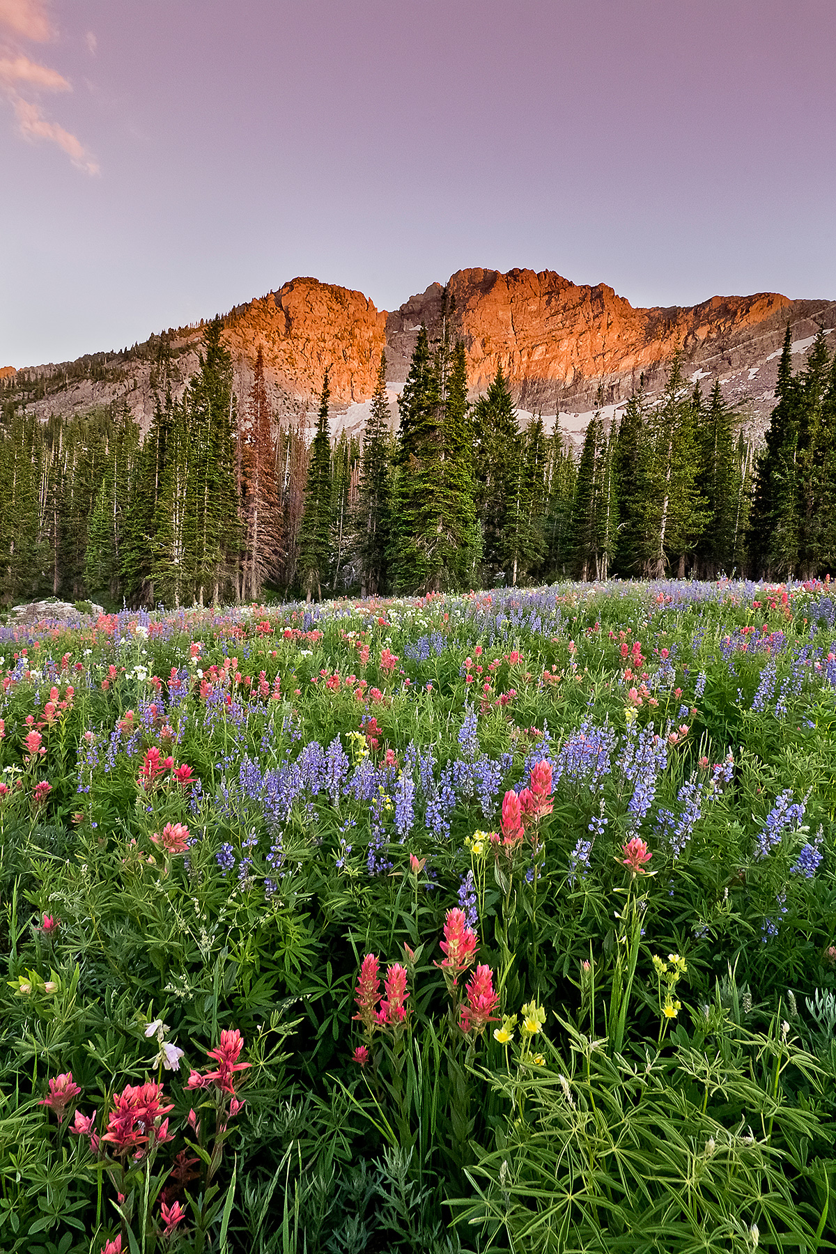 Wildflowers of Albion Basin