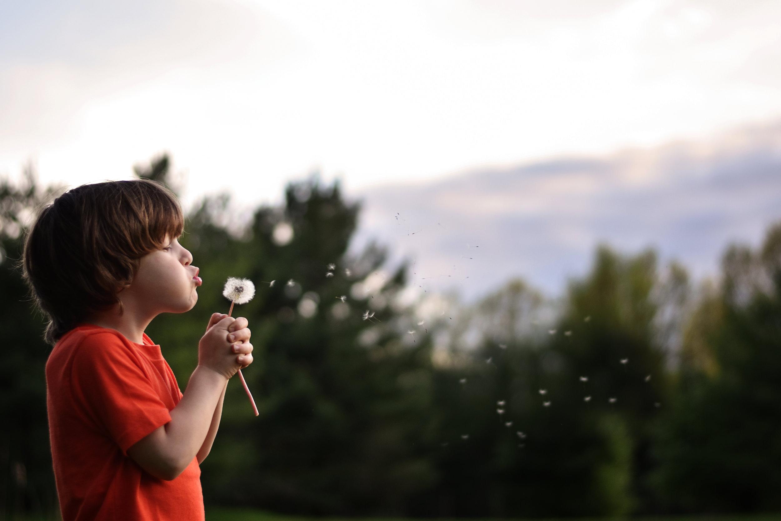 D5600 boy blowing dandelion fluff by kellie bieser.jpg