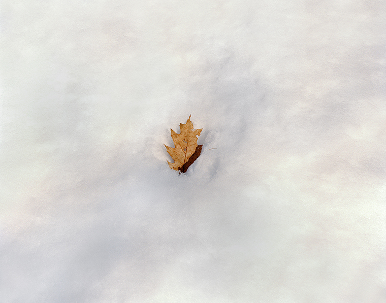 Oak Leaf, Pond Path, Walden Pond