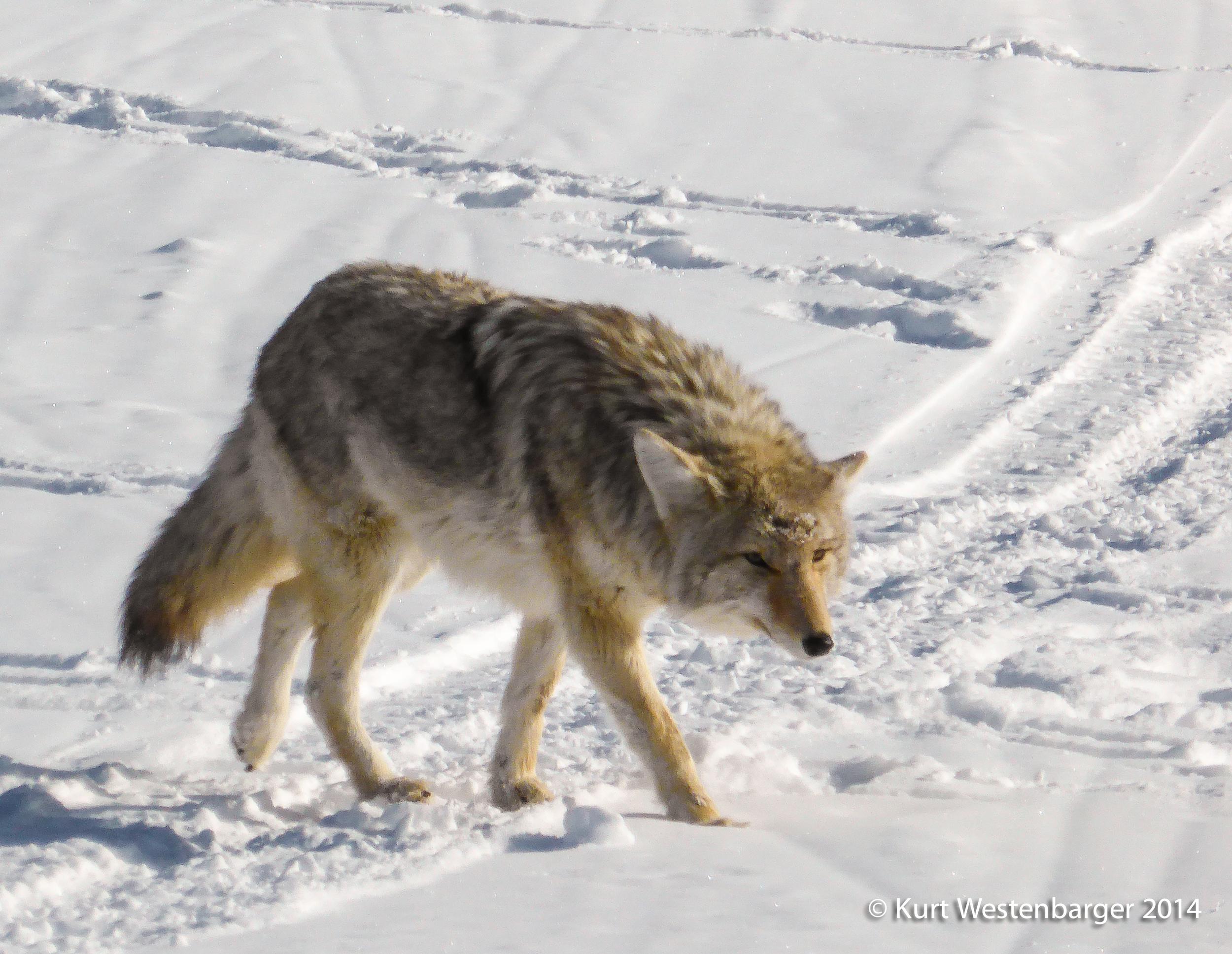 140204_Yellowstone_159.jpg