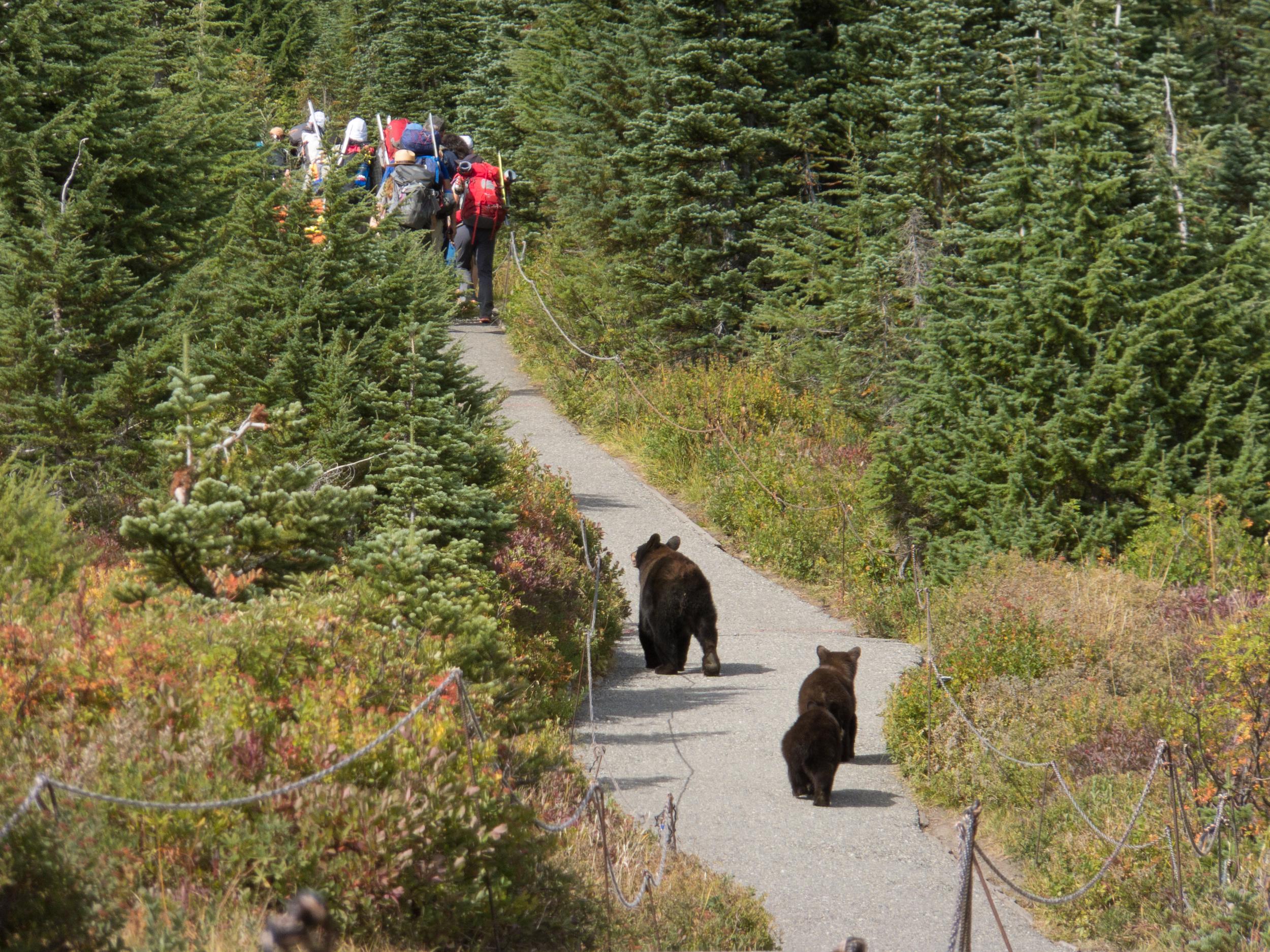 In Pursuit, Mt Rainier NP