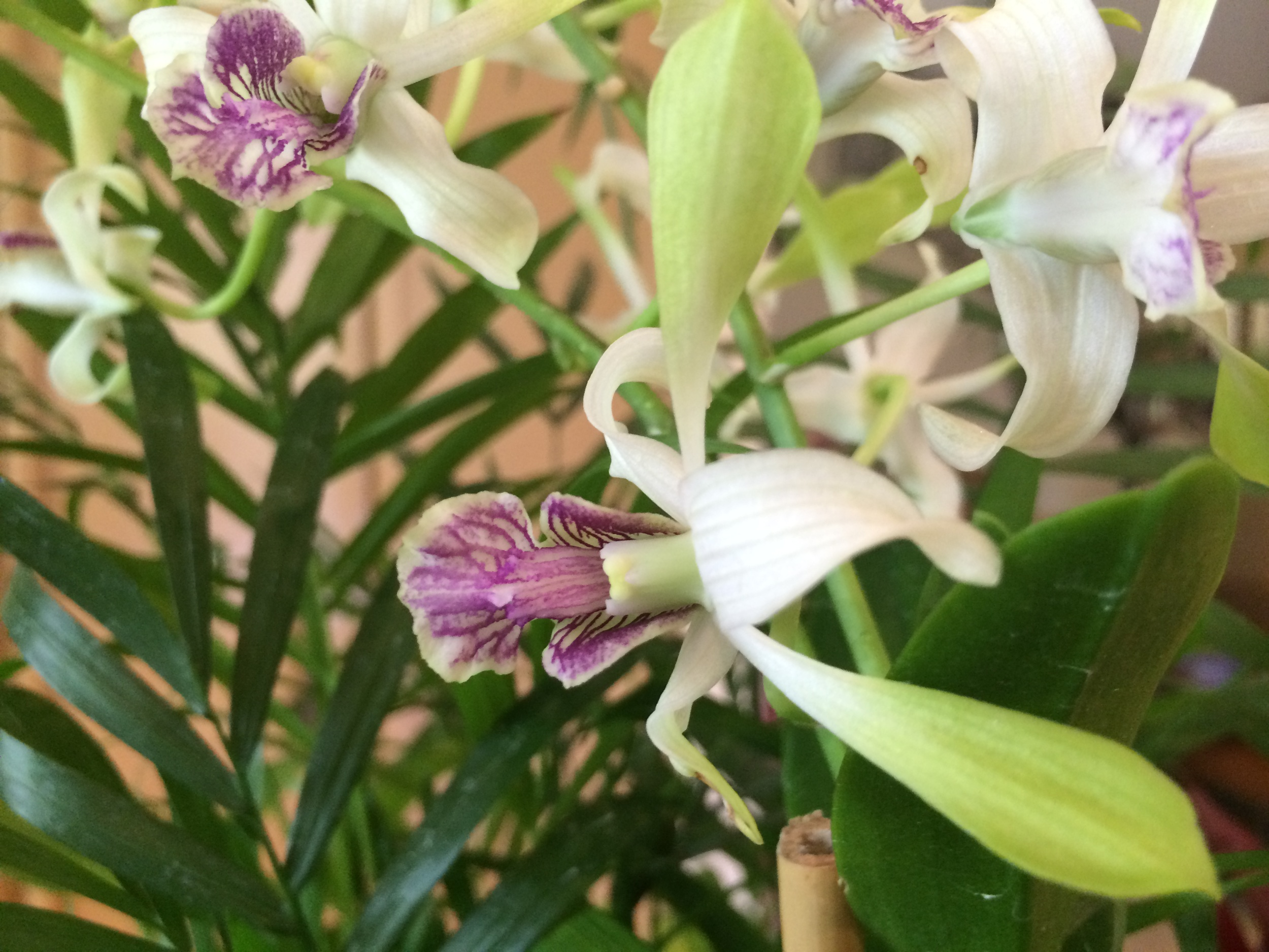 Orchids at Rosalie's