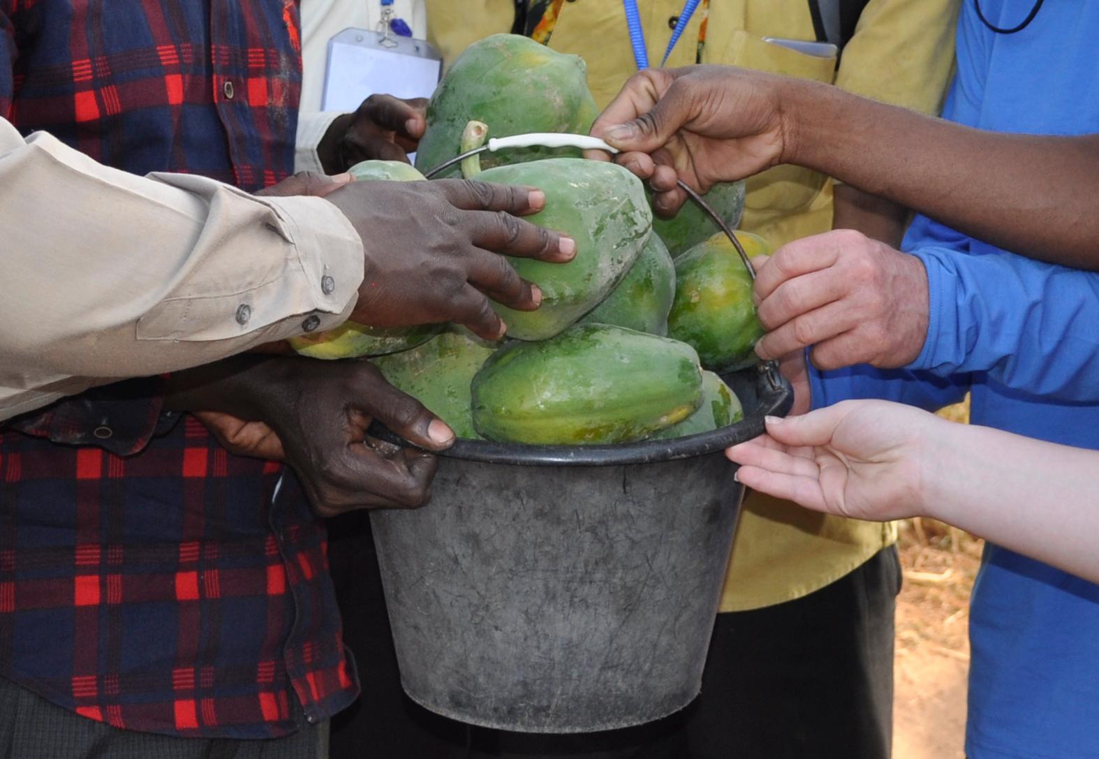 Agriculture Enterprise Business Program -