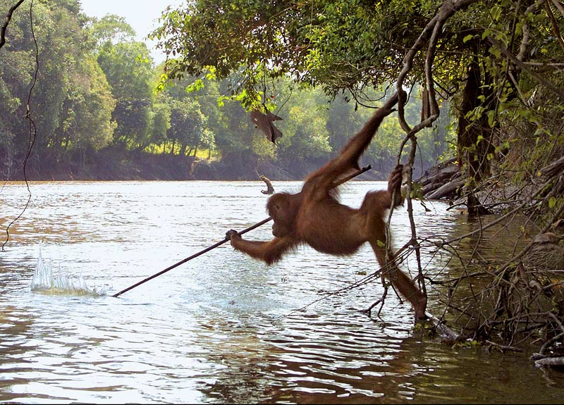 'What on earth are you doing?' said I to the monkey when I saw him lift a fish from the water and place it on a tree. 'I am saving it from drowning,' was the reply.  Song of the Bird, Anthony de Mello