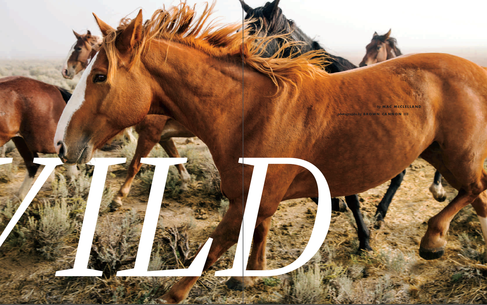 """THE FIGHT ABOUT WILD HORSES IS CERTAINLY PART OF AMERICAN HISTORY."""
