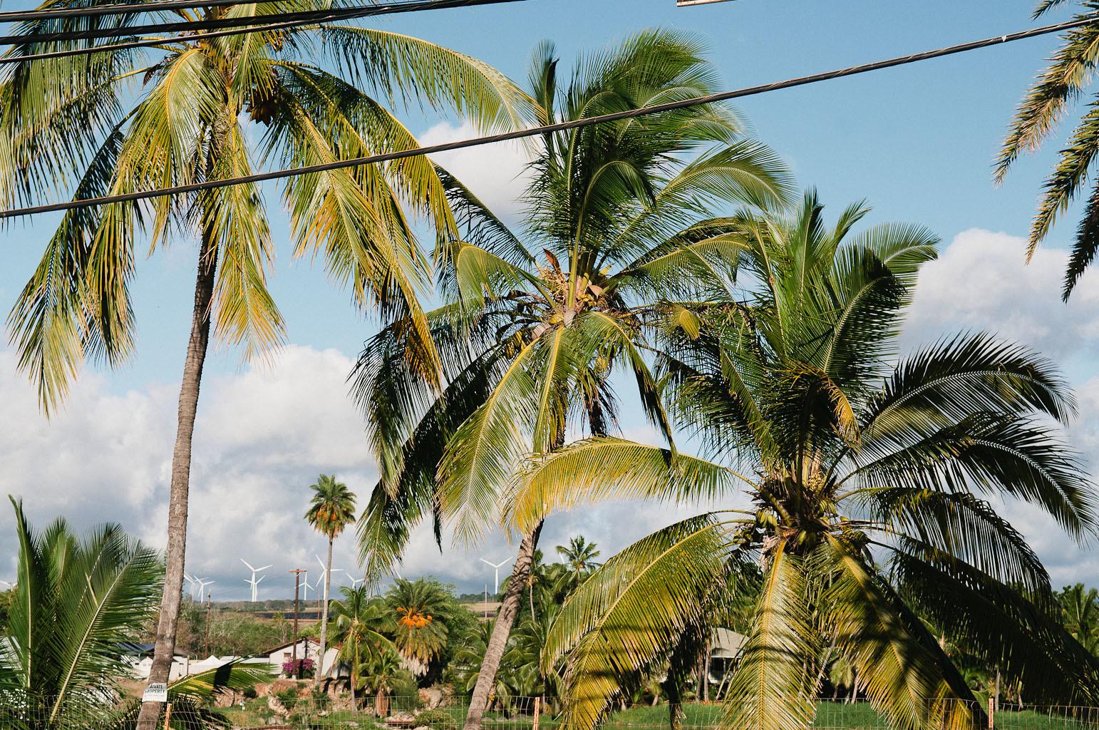 hawaii2013_42.jpg