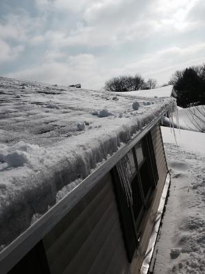 winter-damage.jpg