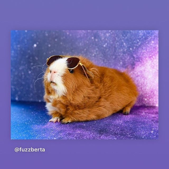an astro without guinea pigs is an astro not worth studying. Get me a #GunieaPigConstellationPlease