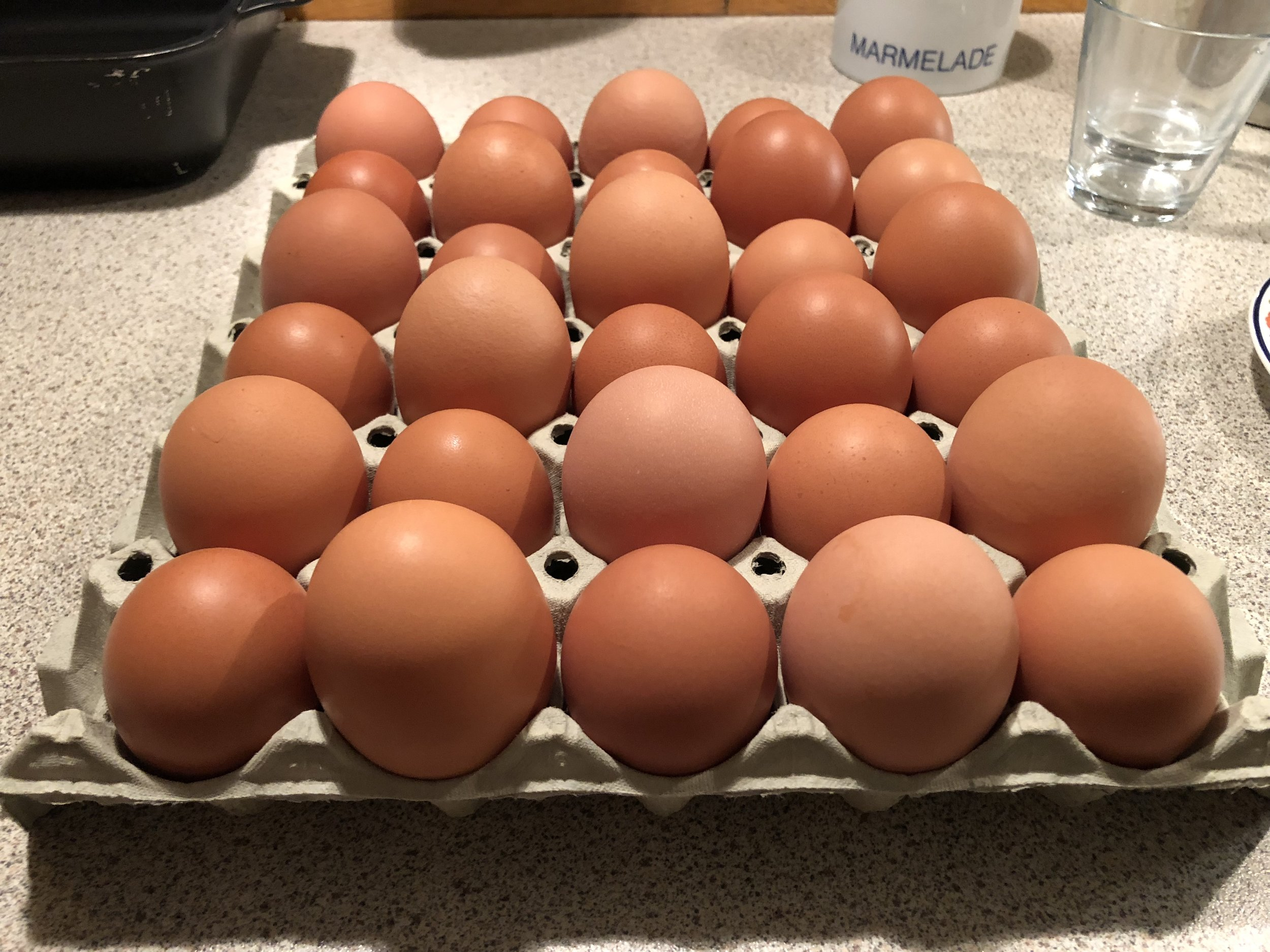 danis egs only come in large and extra large, and they are good!
