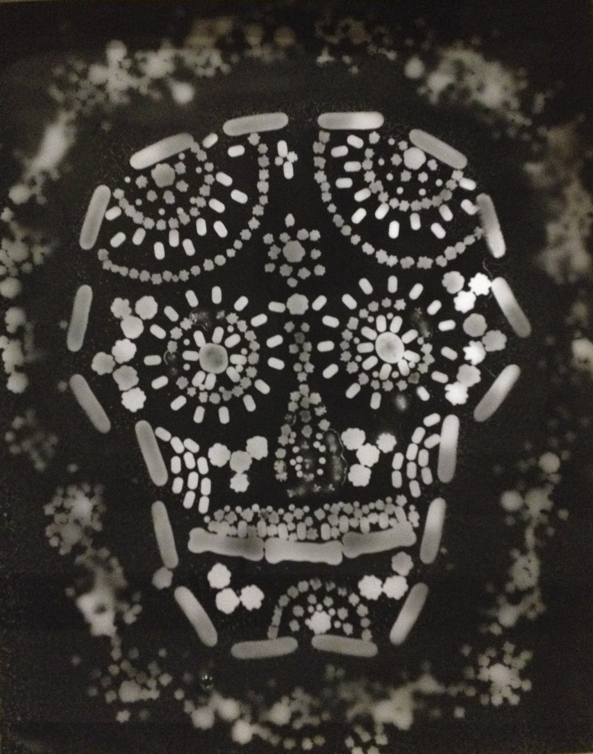 The photogram on a tray of fixer