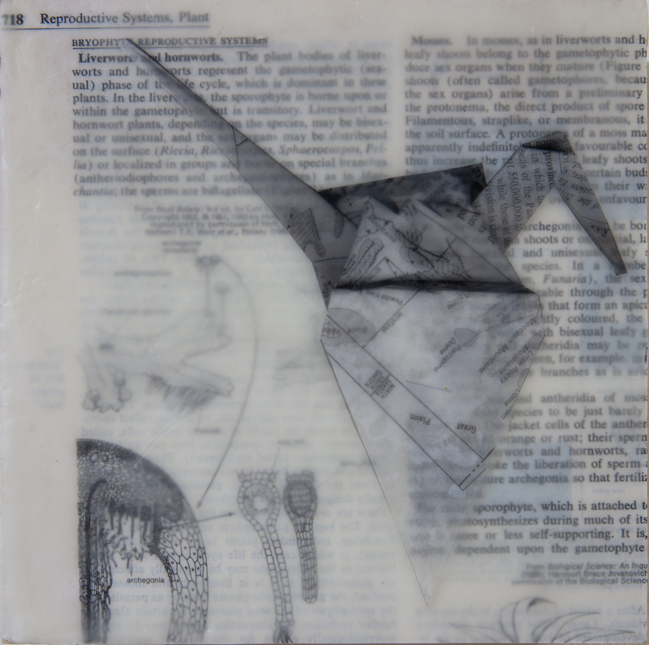 "Encaustic medium, japanese paper, encyclopedia page on board  6""x6"""