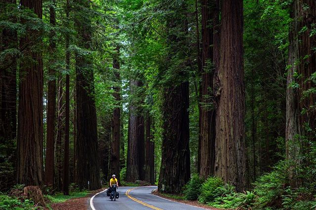 June 2017, a short jaunt down the west coast brought me to the Avenue of the Giants in Humboldt Redwoods State Park, California