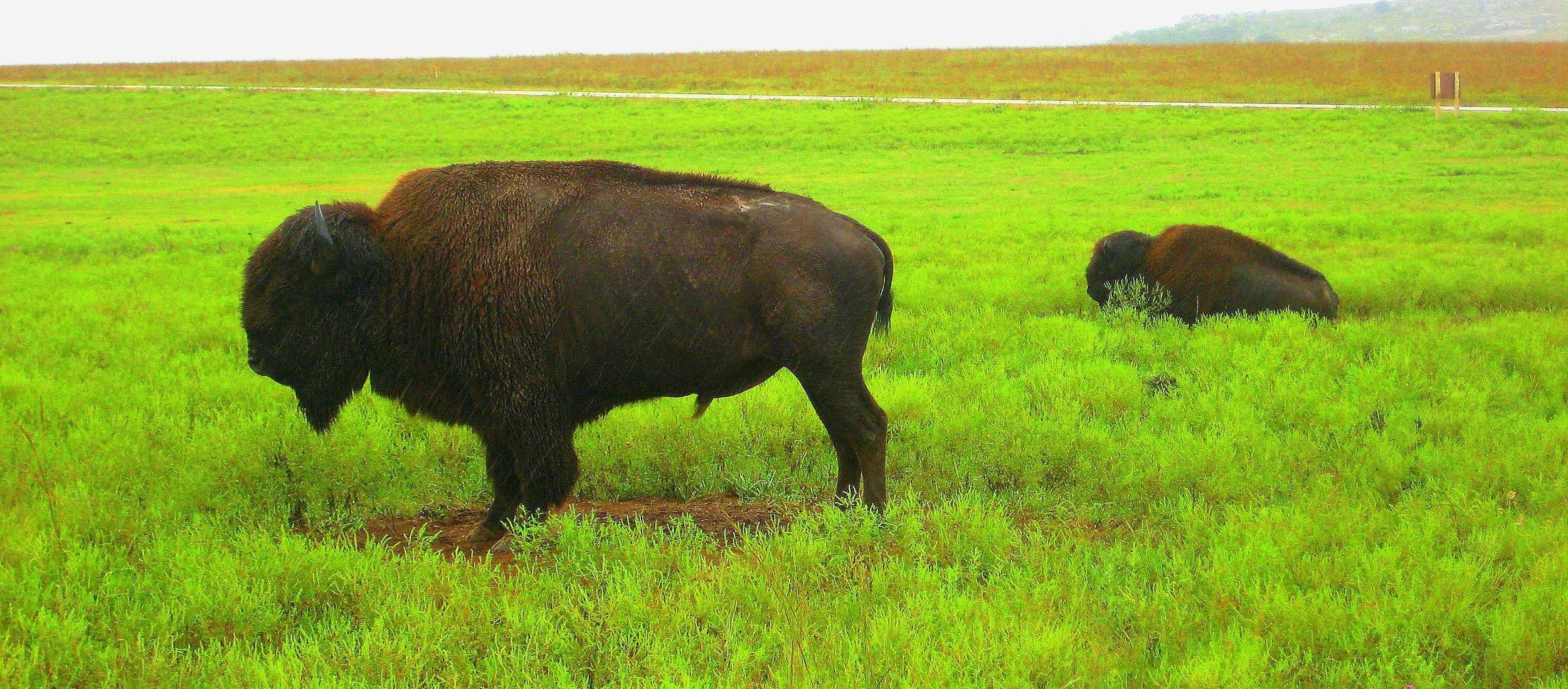 Wichita Mountains Wildlife Refuge, near Lawton, Oklahoma