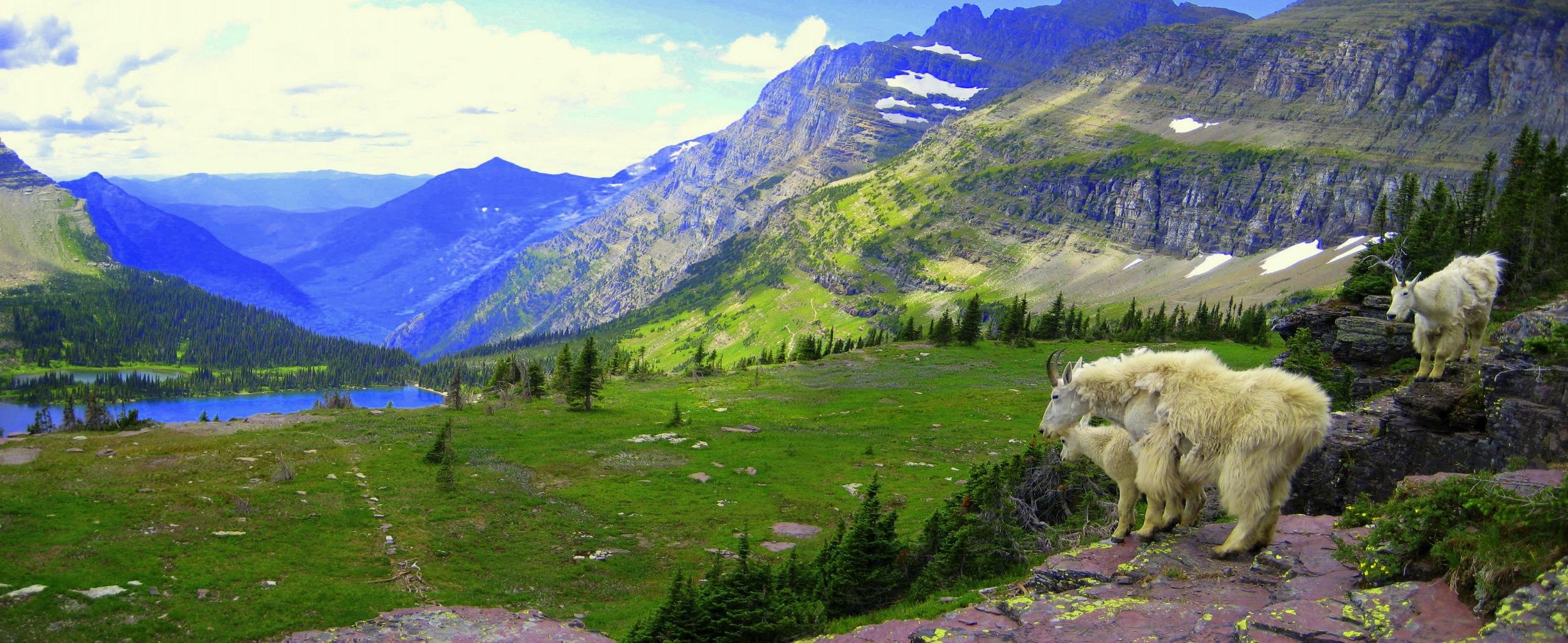 Glacier National Park, near Columbia Falls,  Montana