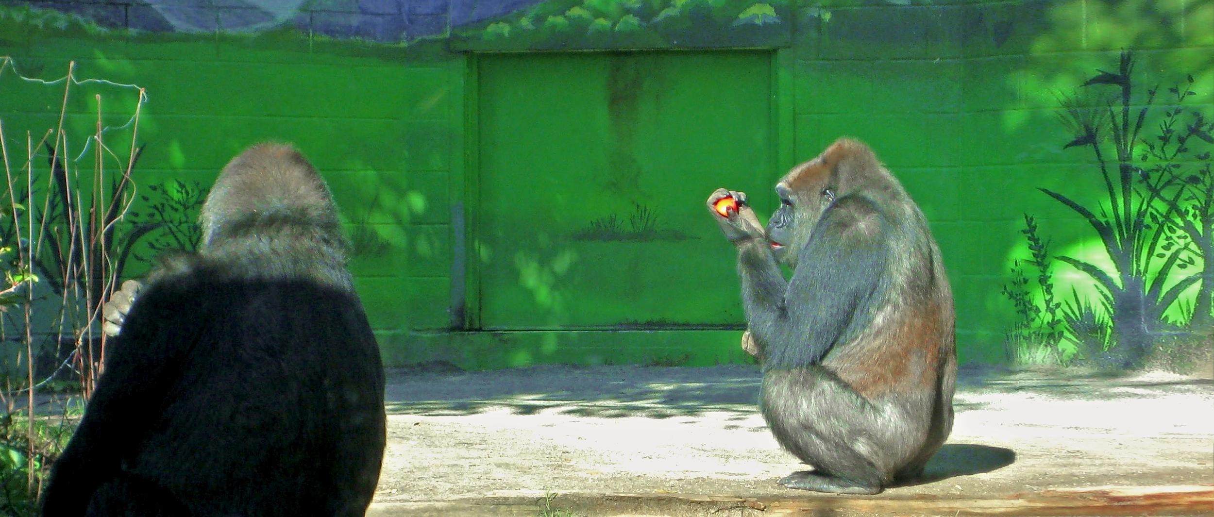 San Diego Zoo, San Diego, California