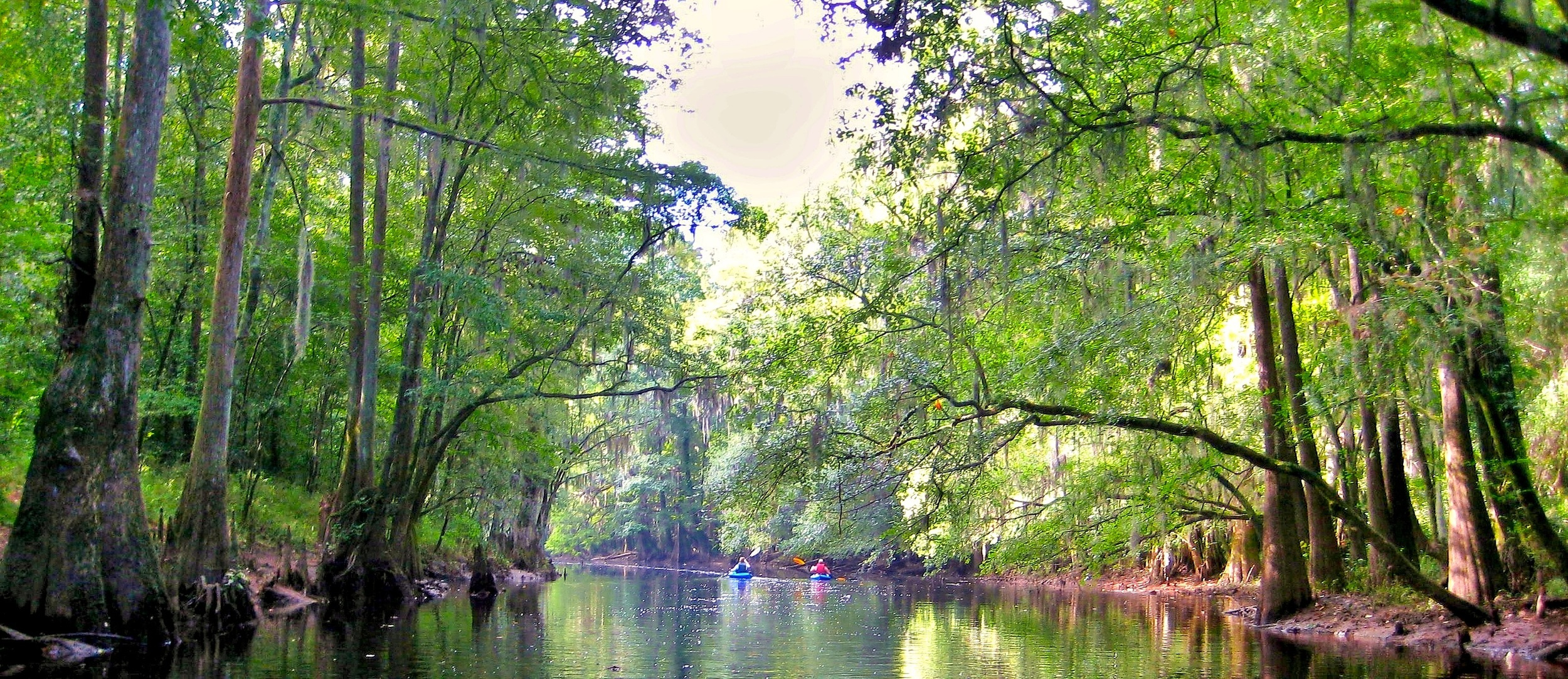 Congaree National Park, near Hopkins, South Carolina