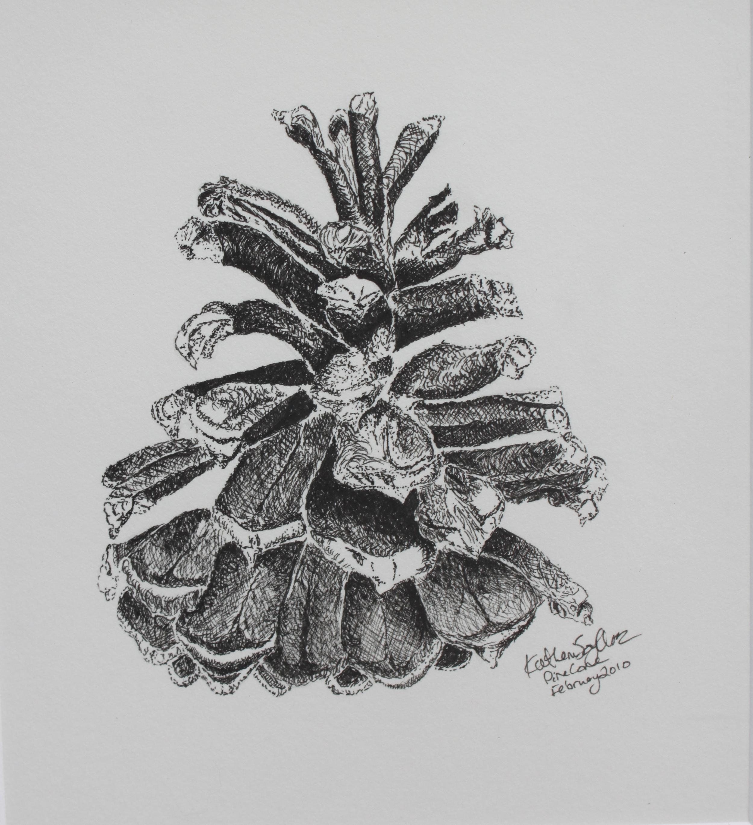 White Pine Cone  - 2010 - Micron Pen on Paper