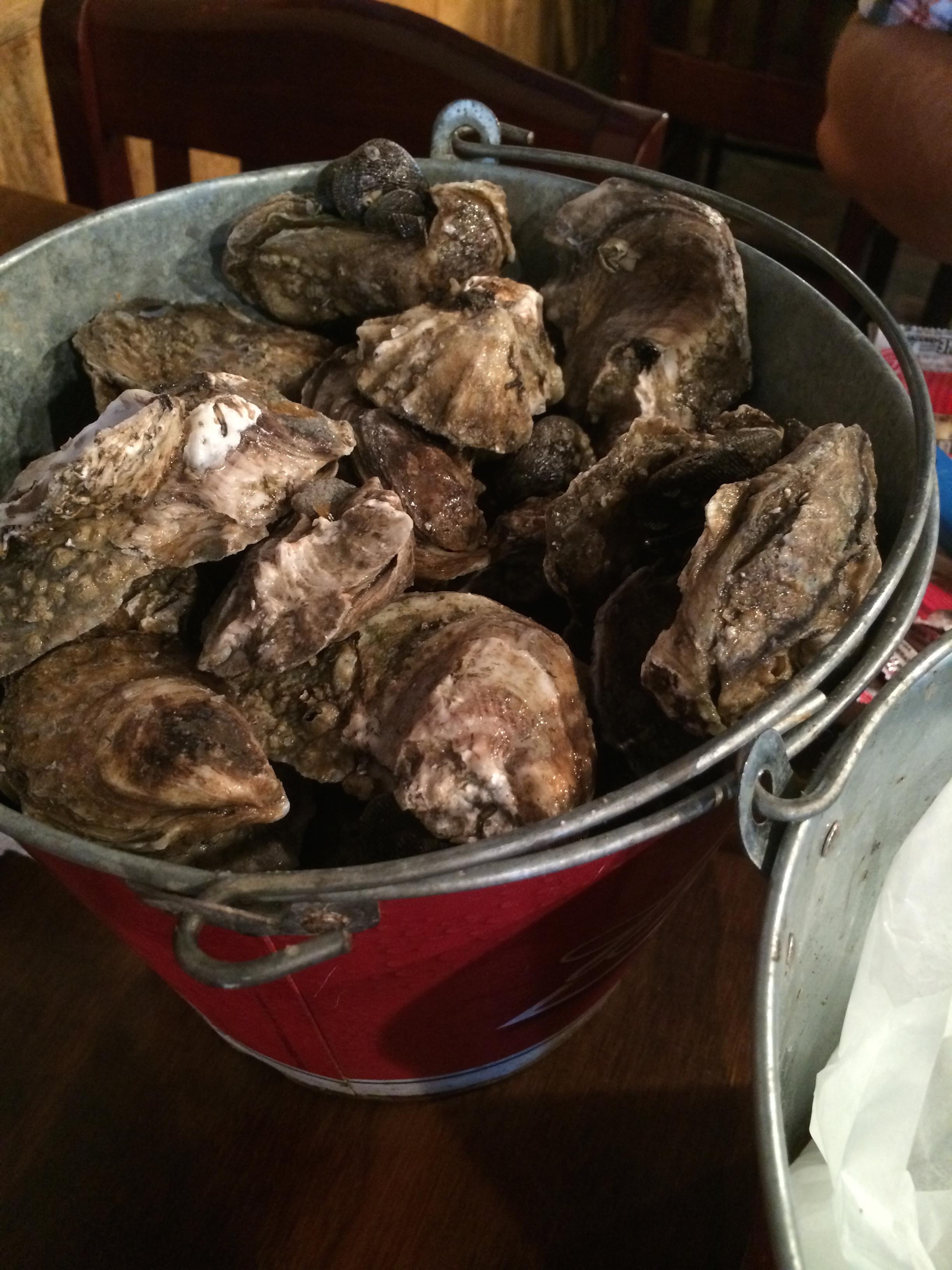 bucket o' oysters!