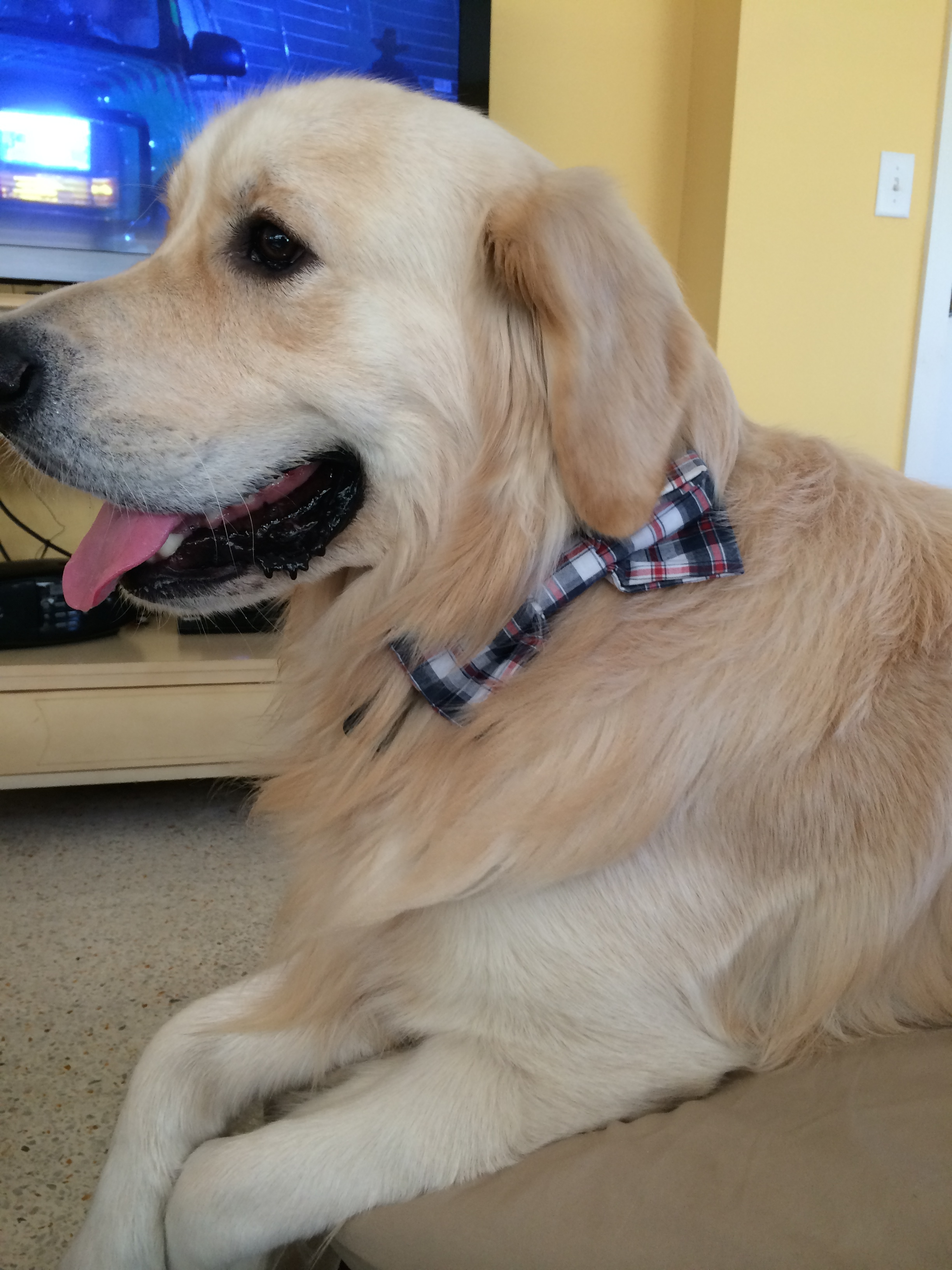 Archie' early Christmas bowtie