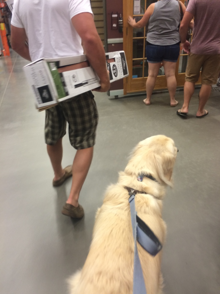 Archie's first Home Depot trip - such a good boy!