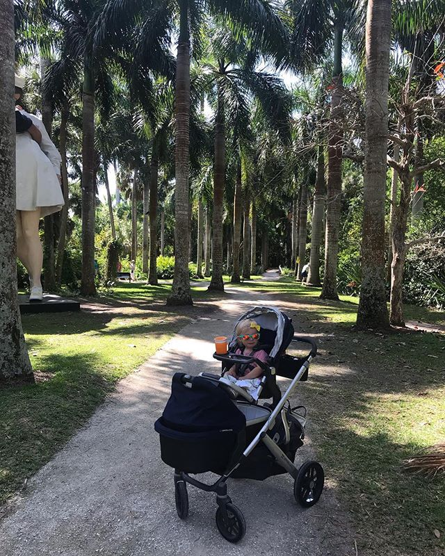 Yesterday we explored @mckeebotanicalgarden - Wynnie always loves it there and she directed the way as we found a few new beautiful areas! 🌞🌺🌴#mckeebotanicalgarden #verobeach #treasurecoast #uppababyvista #uppababyadventures #roshambobaby
