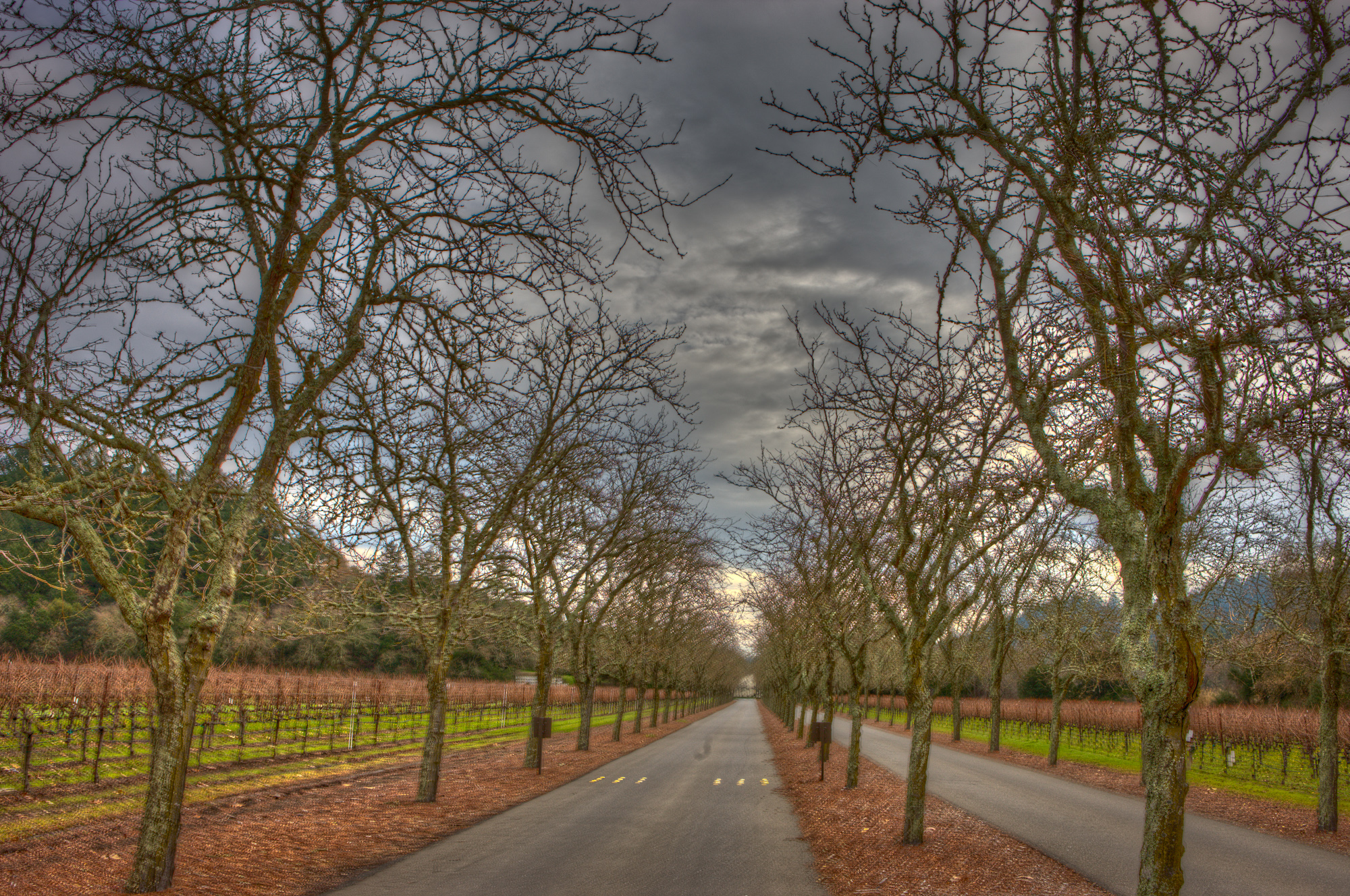 The entrance to Sterling wine vineyards is spectacular.  Here are two versions of the same images.  The first is a High Dynamic Range on a cloudy day   Second is a Black and white version of same.