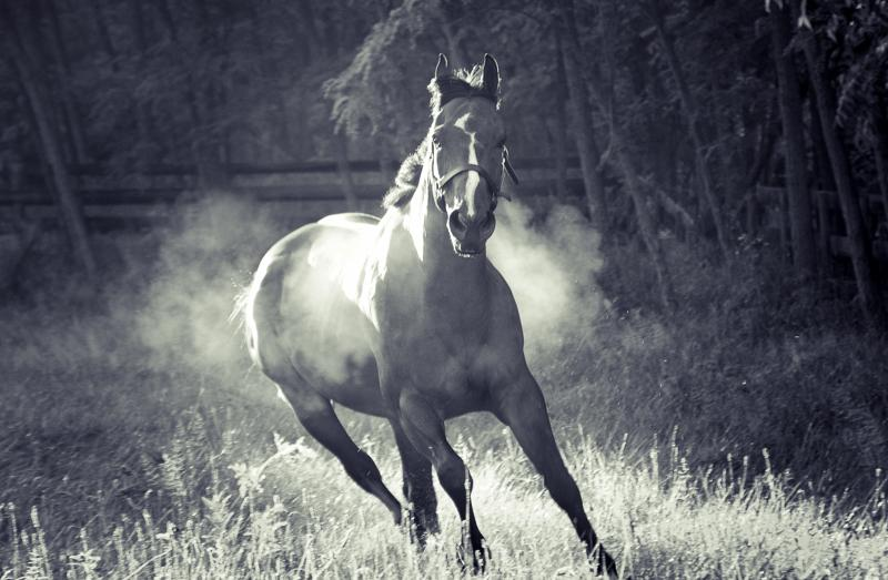 Horse photography  Indianapolis