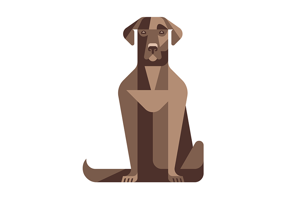 Choco Lab by JOSH BRILL.png