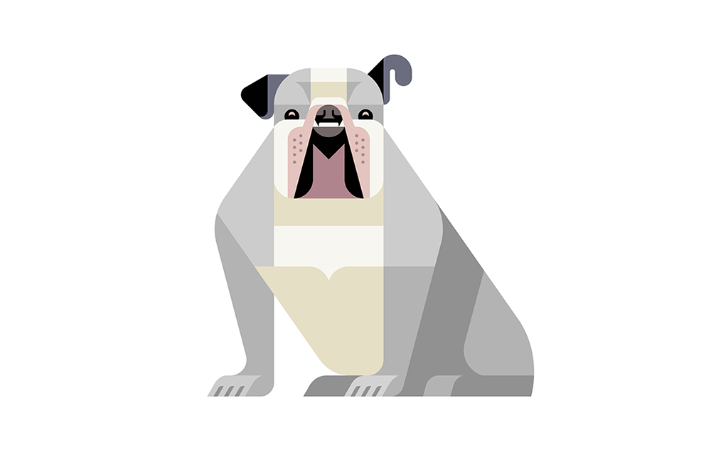 English Bulldog by JOSH BRILL.png