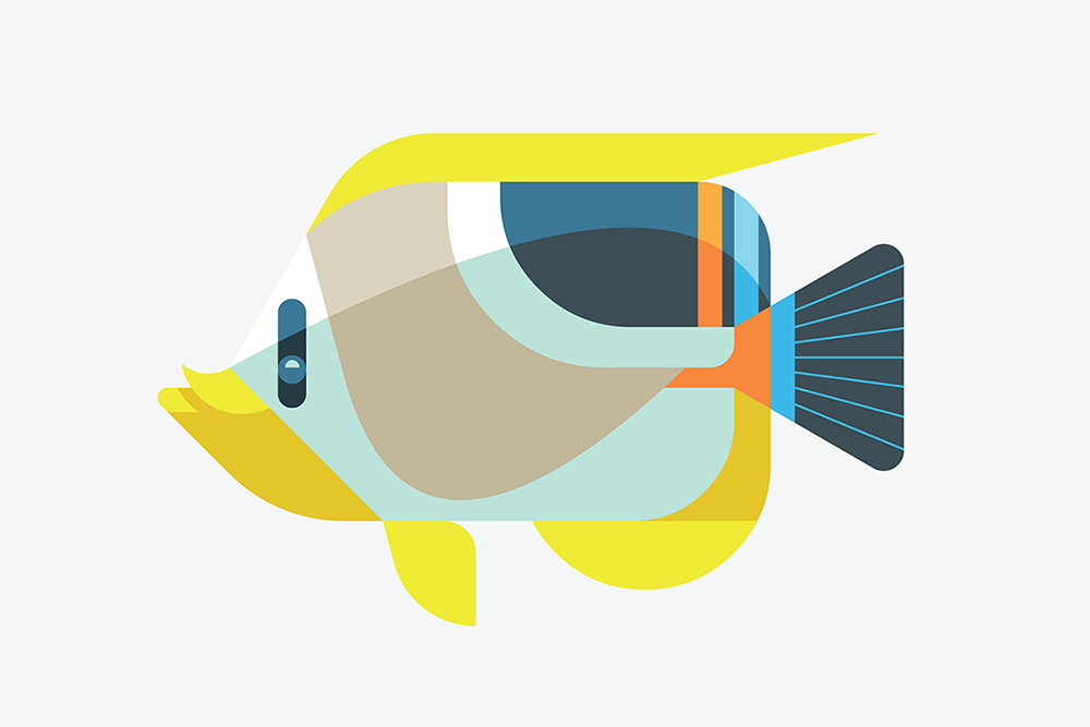 Saddleback Butterflyfish by JOSH BRILL.png