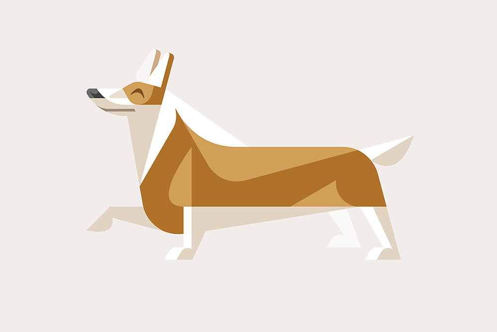 Welsh Corgi by JOSH BRILL.png