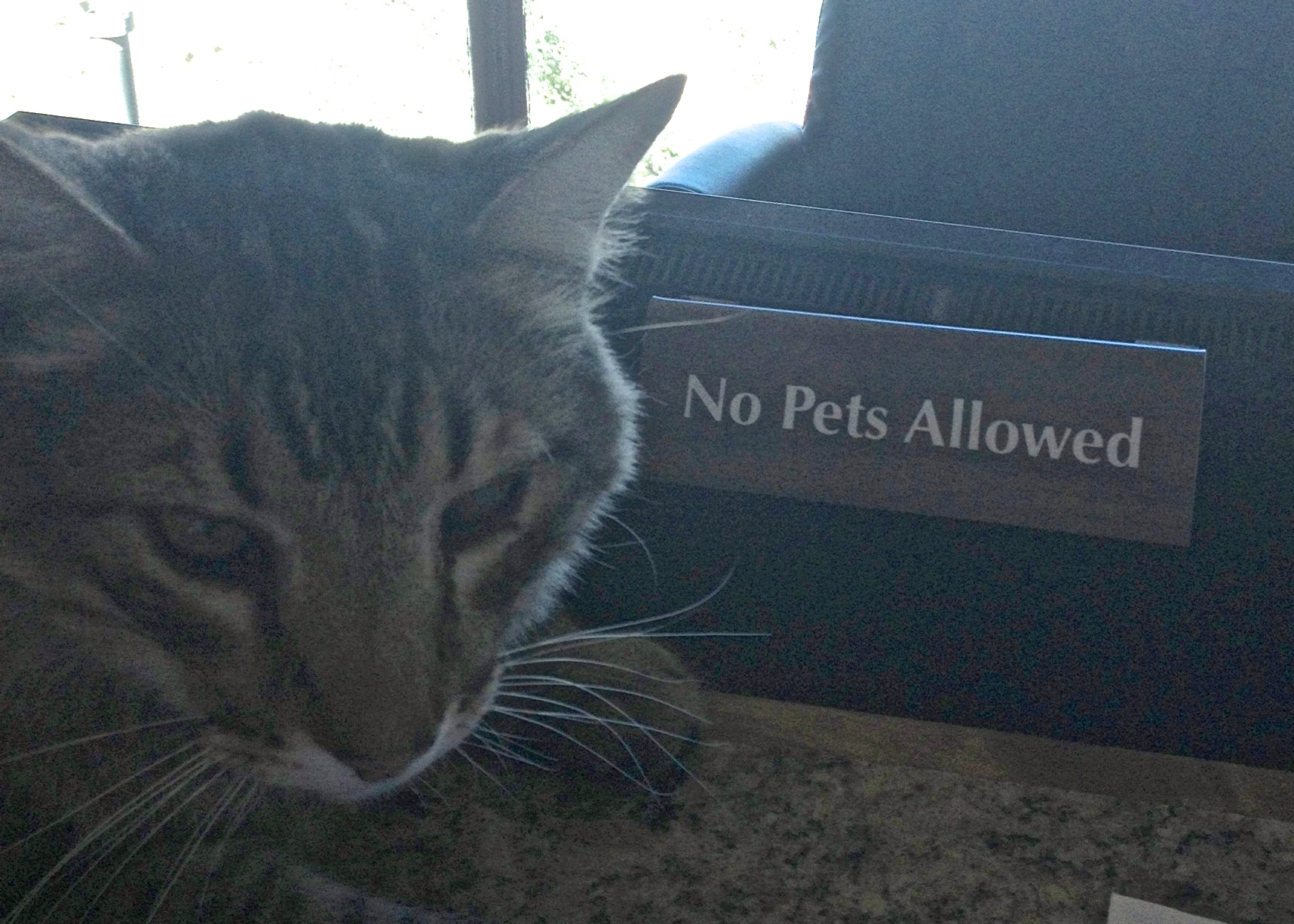ozzy says no.jpg