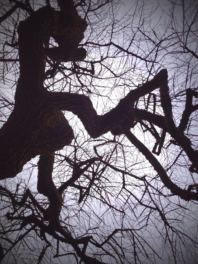 Arboretum Photo Walk - Mobile Pics - #Scio12