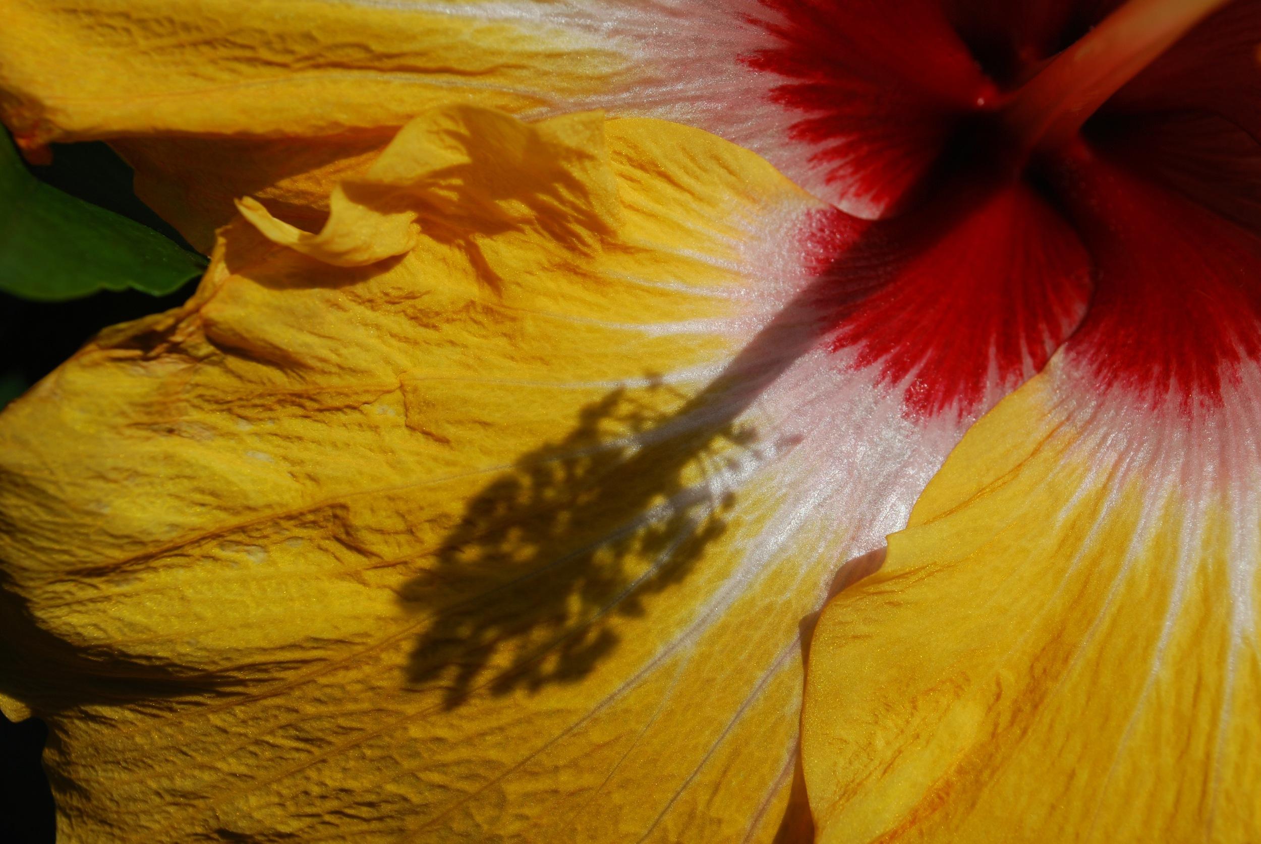 Longwood Gardens in bloom - Quick shots, November 2011