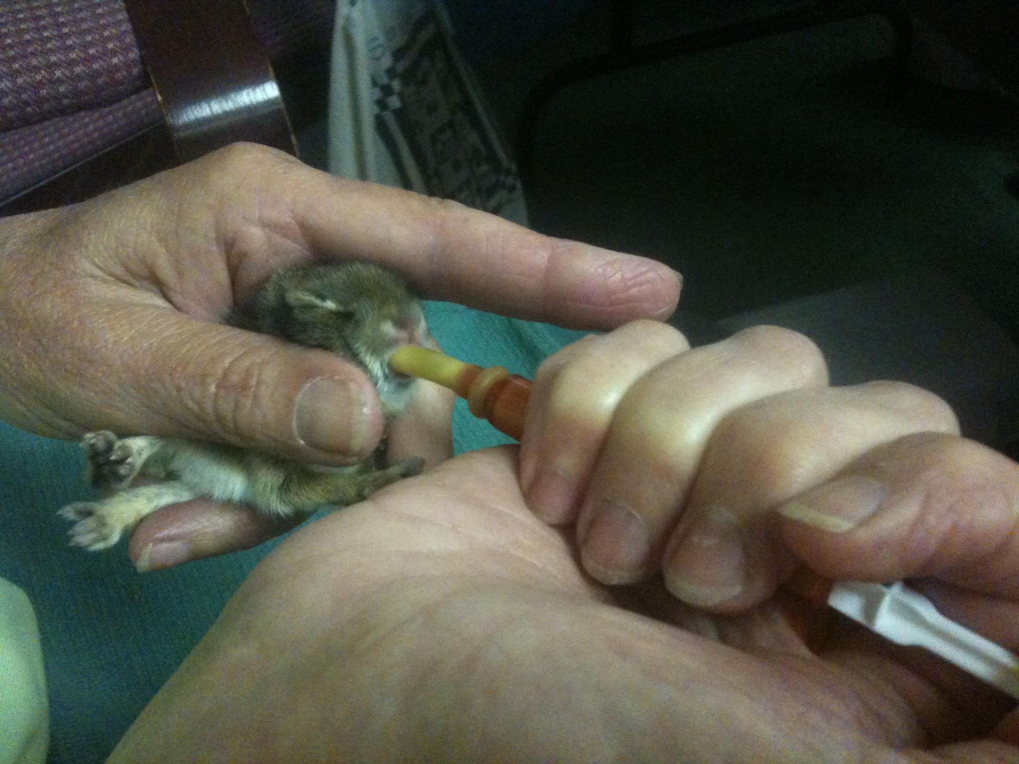 Itty Bitty Teeny Tiny Wildlife Rehab