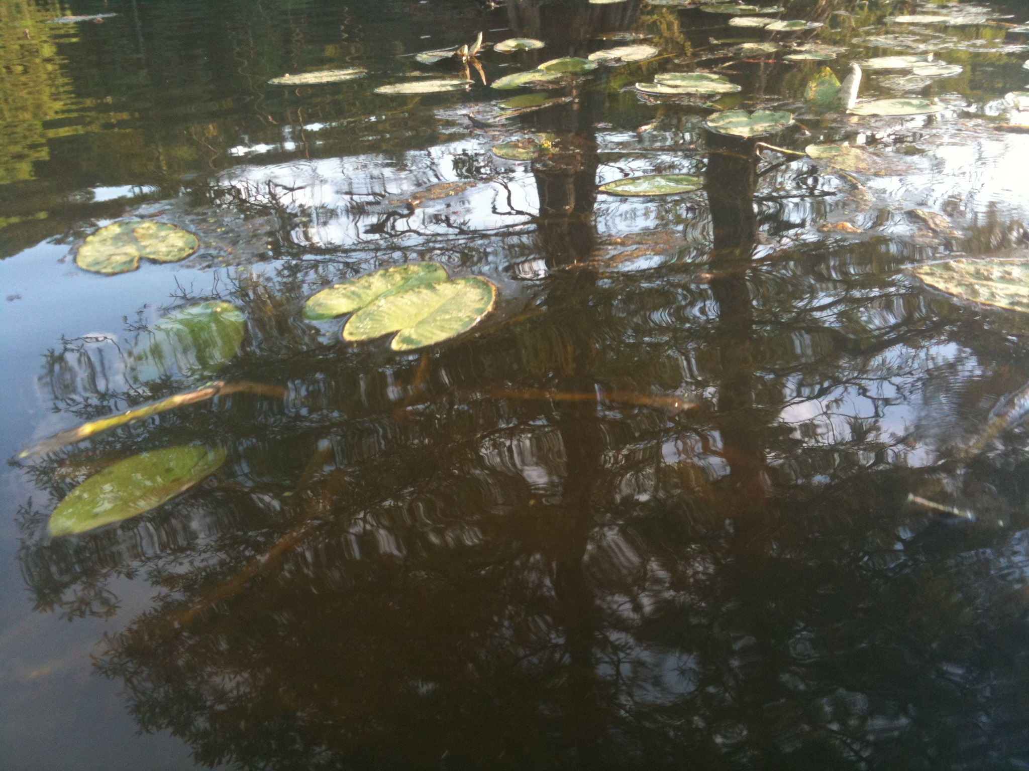 Along the Water Trail - Paddling Trap Pond