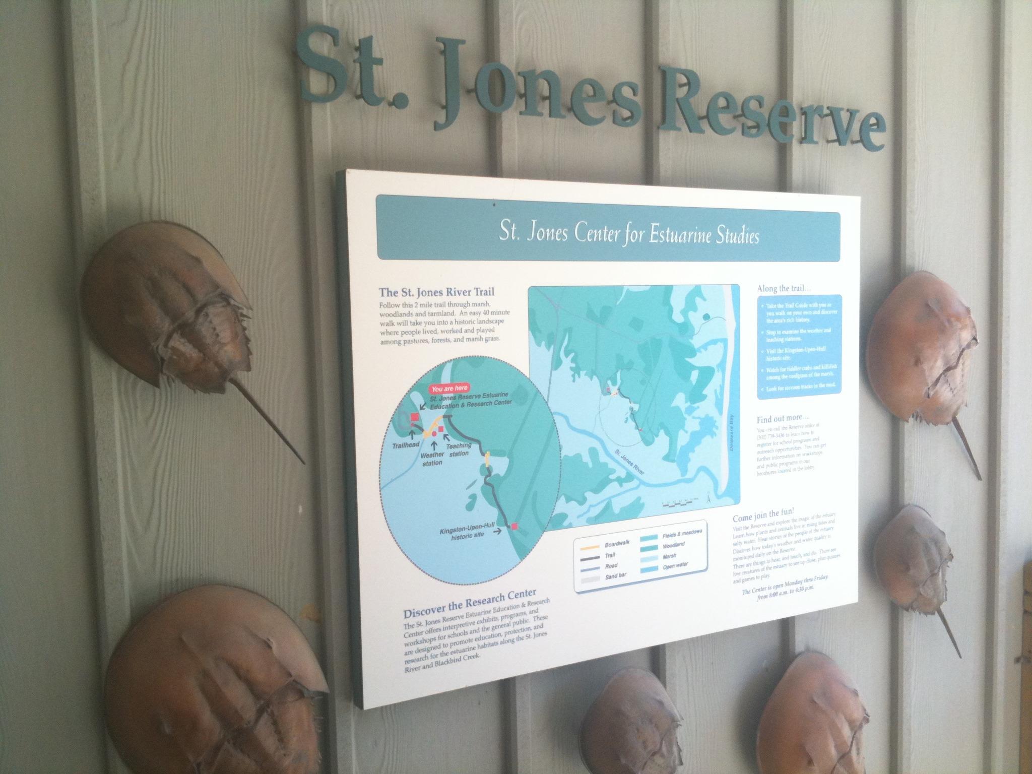 St. Jones Reserve in Dover - Hidden Treasure