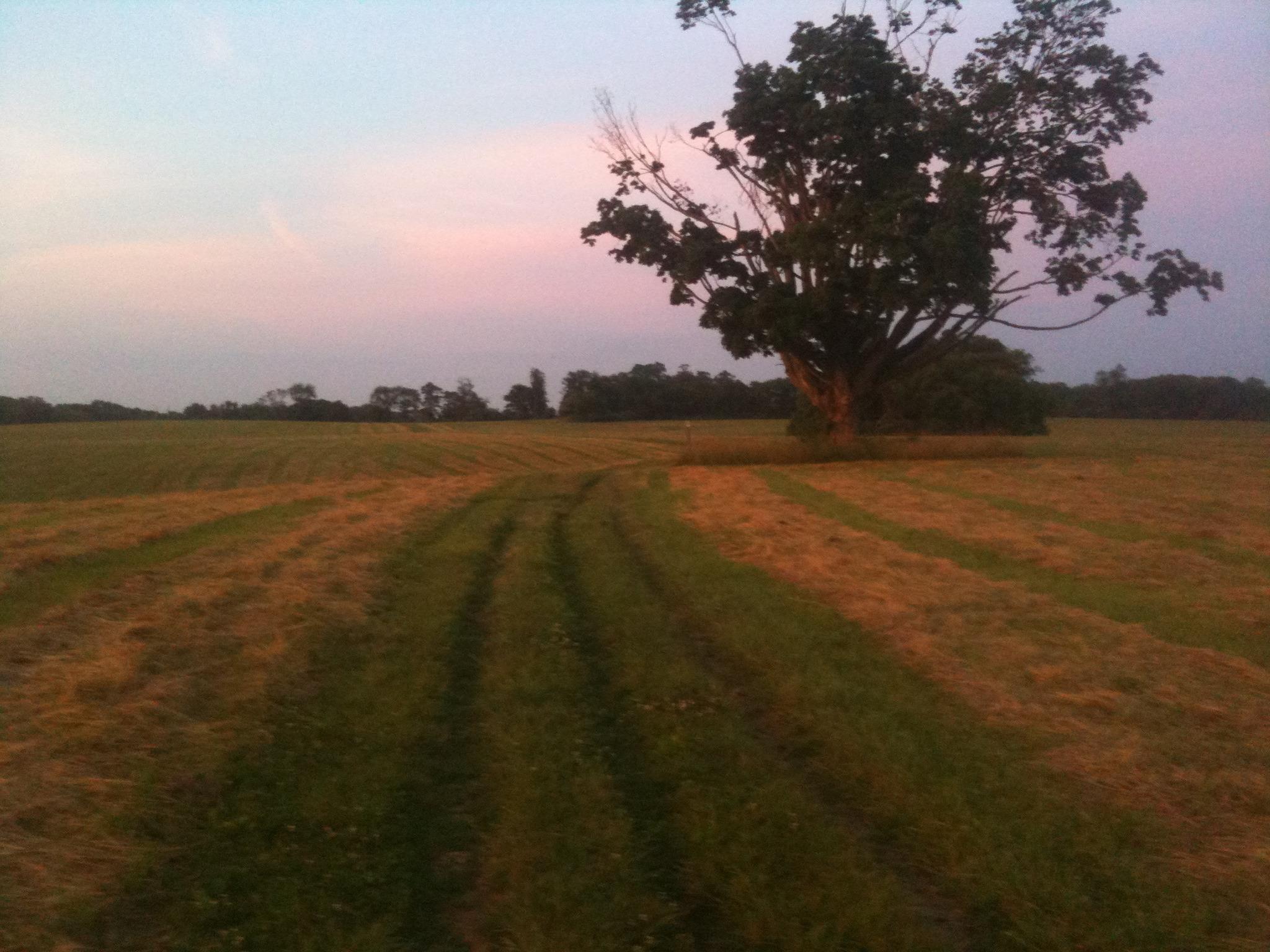 Along the trail - Fair Hill at Dusk