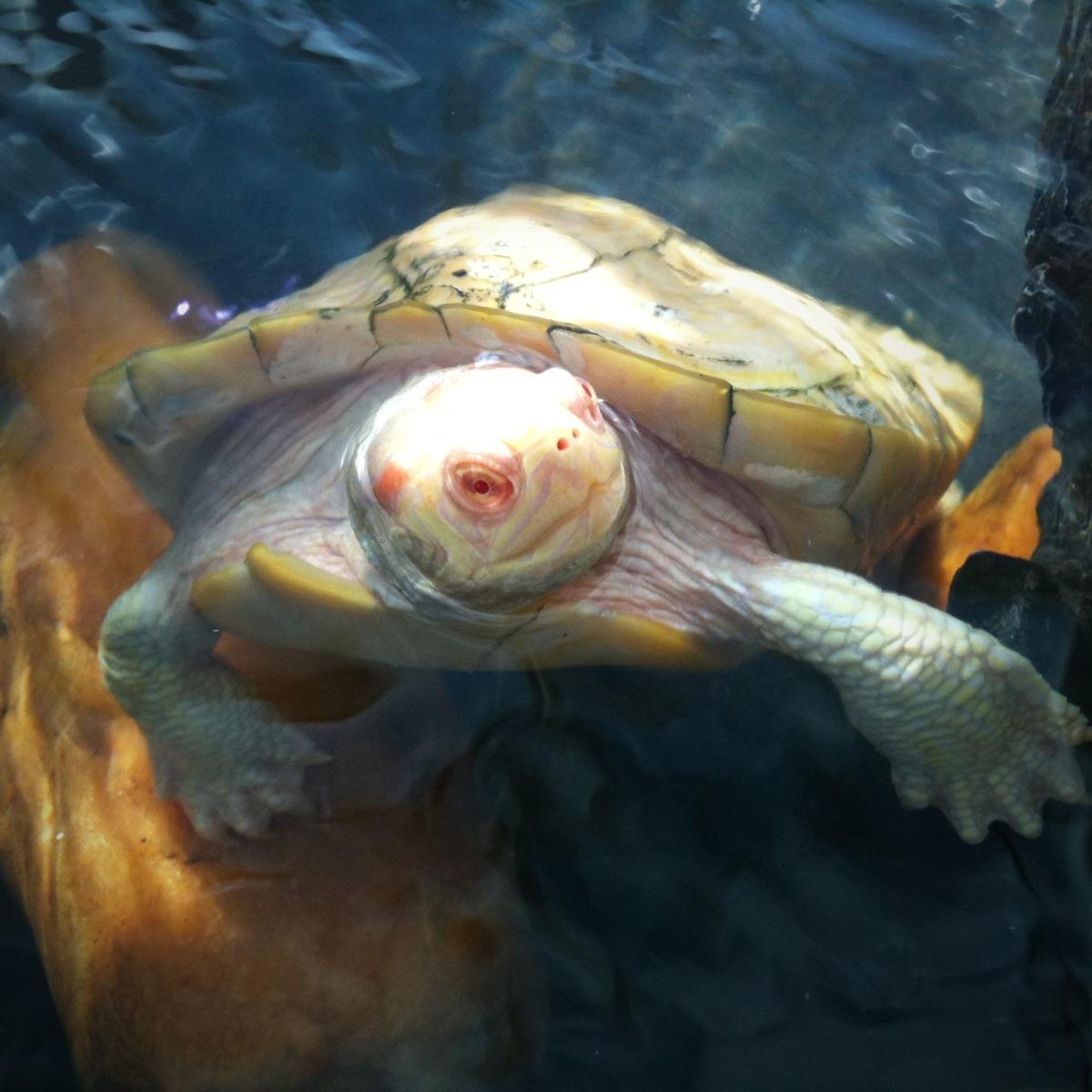Tour of NC Aquarium - Fort Fisher - Mobile Photos