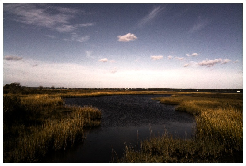 Scenes from Assateague