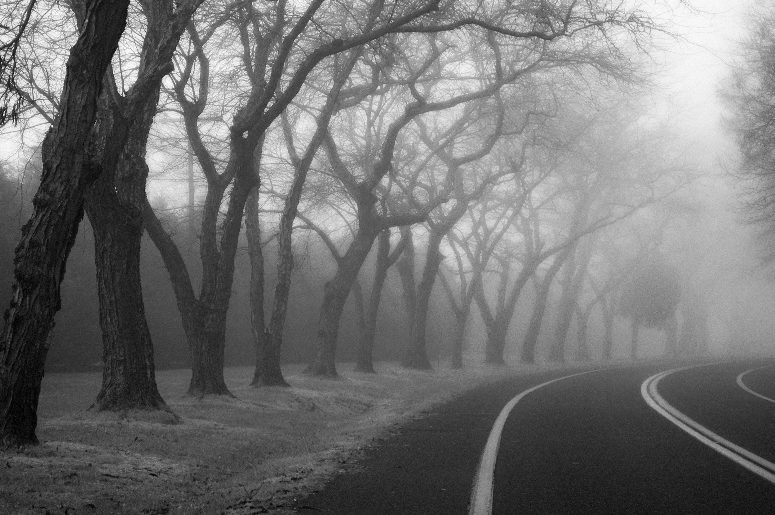 On Delmarva: Assateague Road