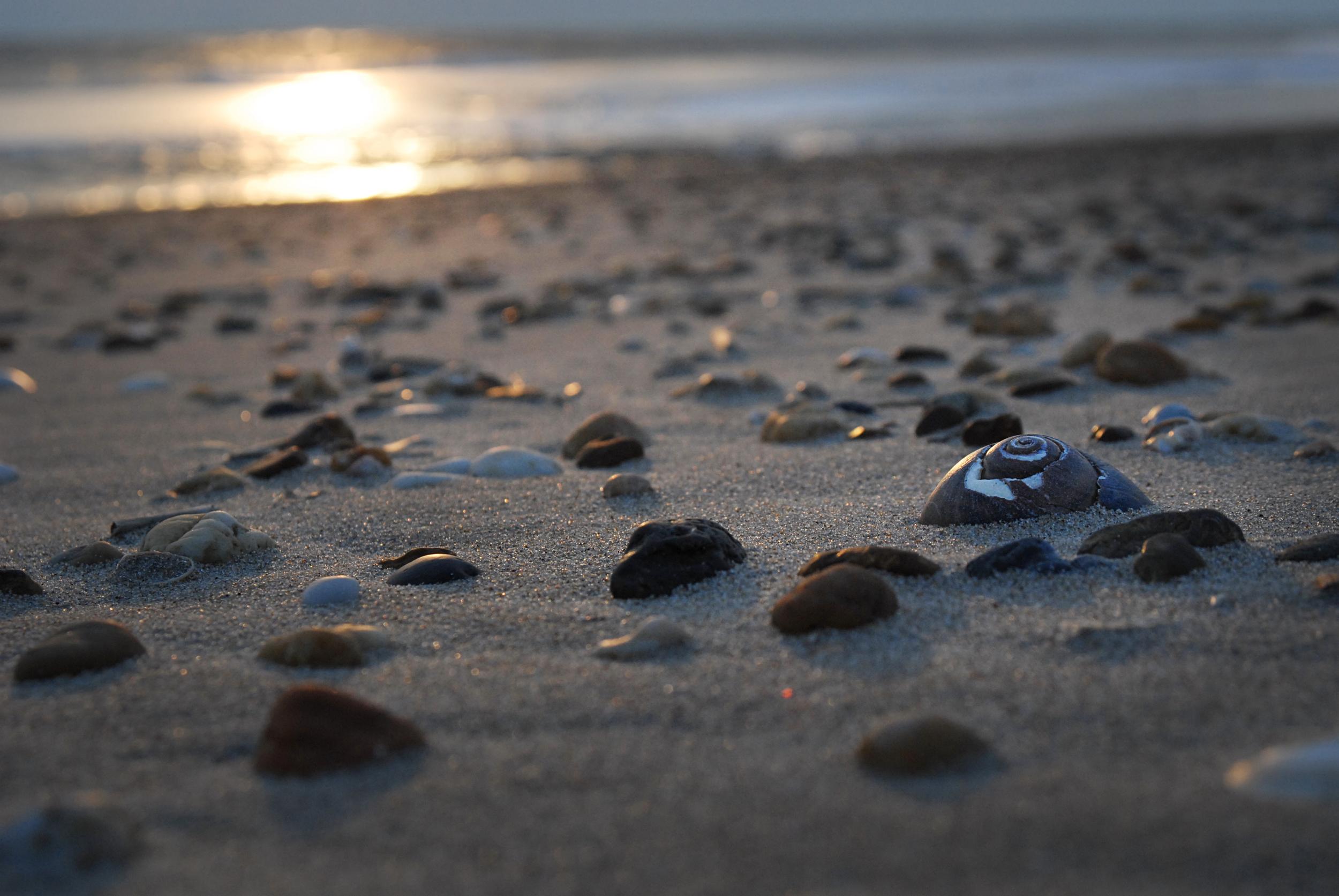 On Delmarva: Atlantic sunrise
