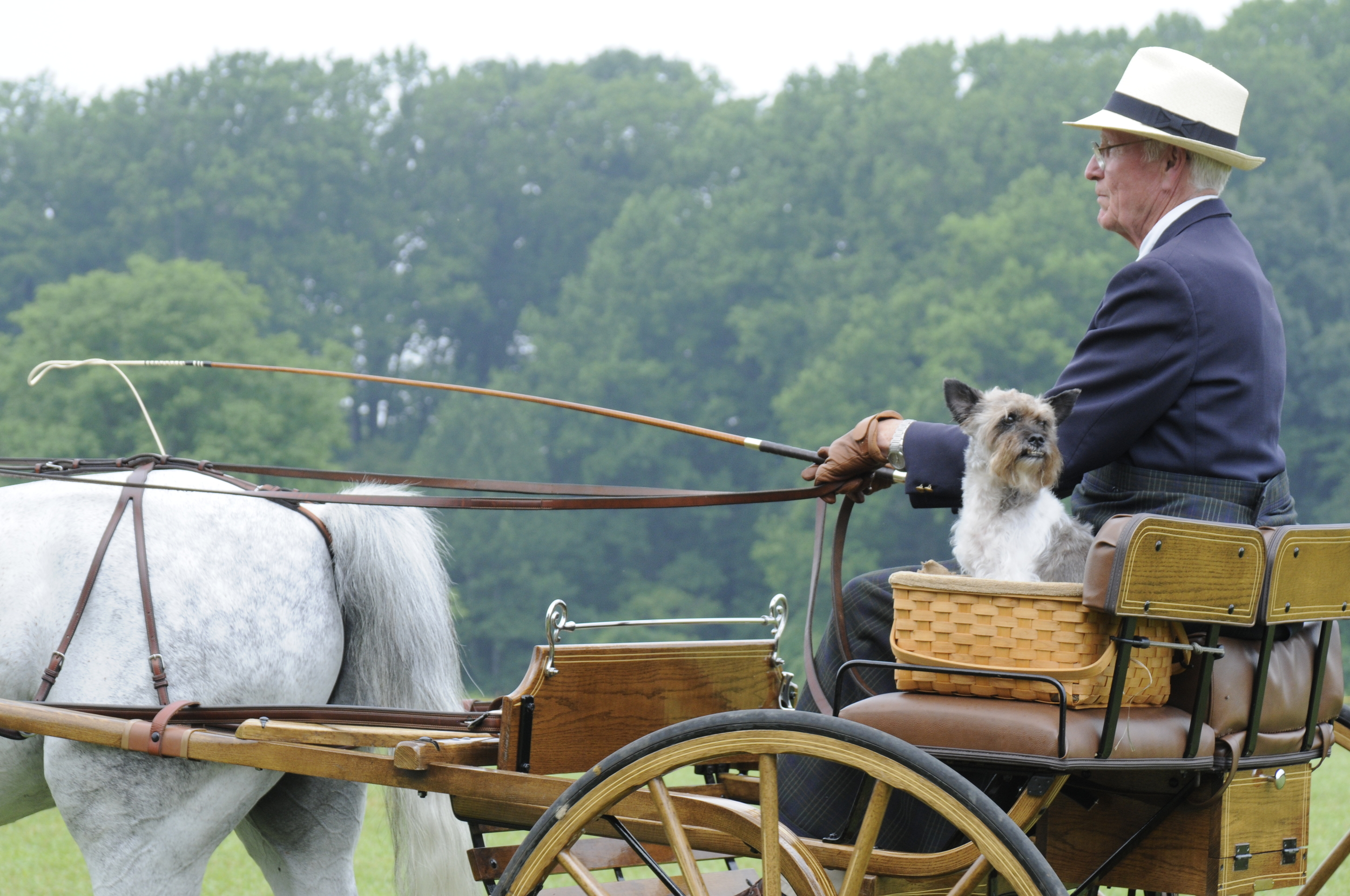 Event: Carriage dog competition
