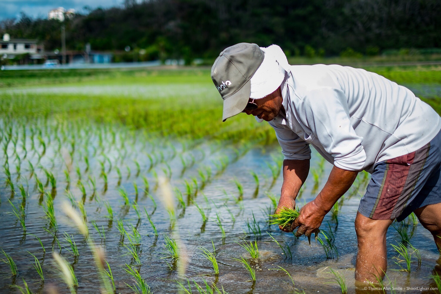 Rice farmer planting rice in Onna, Okinawa, Japan. Fujifilm X-Pro1, 35mm f/1.4 @ f/1.4, 1/4000 sec, iso 200. Edited in Adobe Lightroom.