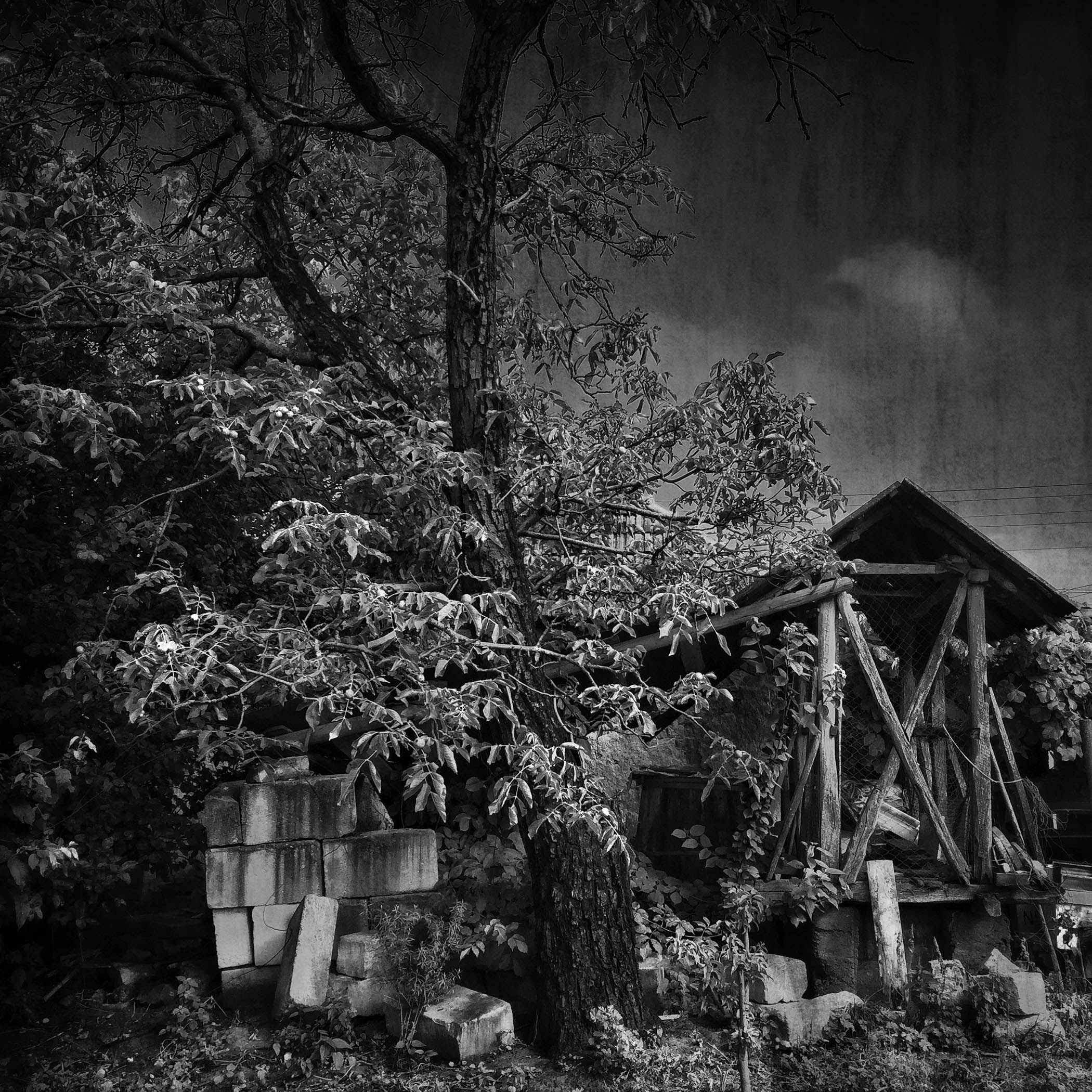 What's left of the old tree, Miheleu, Romania, 2016.jpg