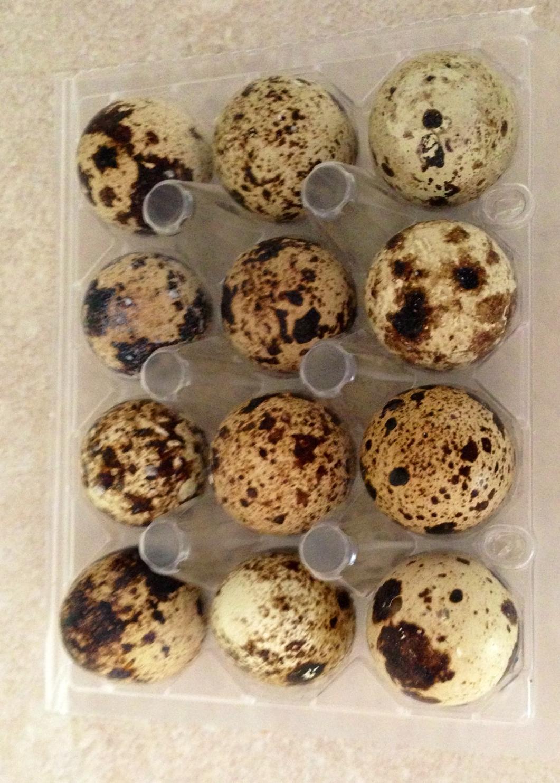 quails eggs.jpg