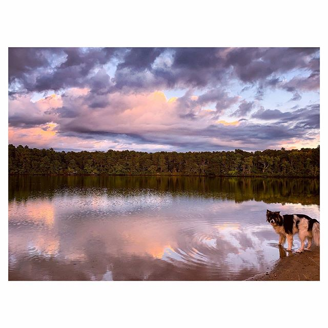 """Basil & I like to catch the sunset at the pond by our house. Tonight as we ran up and down the beach and the sky put on its show, an older woman watched us for a while then came down the stairs, asking if she could meet Basil. I warned her he was skittish around strangers, but she sat down and he immediately liked her - a first, or close to it. She smelled like alcohol and said she was having a bad day, but we're lucky because dogs always  fix everything. She told us her name was Jo and talked about her black lab, Shadow, who took it upon himself to rescue everyone in the water - no matter how safe they were - and who once proudly retrieved a prosthetic leg. She said the leg's owner wasn't amused, but what do you do? """"Dogs are better than family,"""" she told us, noting Shadow had passed on a year ago. Basil did his crazy tear around and pounce dance to cheer her up, which seemed to work a bit. We watched the sun finish setting together, then Basil and I had to get going. She walked us back up the path to where her car was parked and seemed a little sad again as we said goodbye. I'm not sure where you are tonight, Jo, but I hope it's somewhere safe and full of wagging tails. Because she's right: dogs can fix everything."""